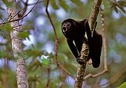 Costa Rica, Naturaleza, Costa Rica