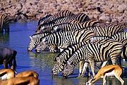 Etosha National Park, Naturaleza, Namibia