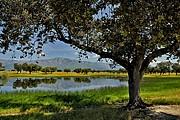 Dehesa, Naturaleza, España
