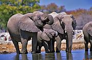 Elefantes, Naturaleza, Namibia