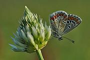 Mariposa, Naturaleza, España