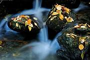 Parque Nacional Aigües Tortes, Naturaleza, España