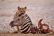 Foto de Naturaleza, Namibia, Namibia - Namibia