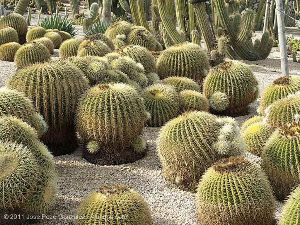 Barcelona Cactus Arbol Barcelona