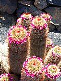 Camara DMC-G1 Flor de Cactus Jose Pozo Gonzalez JARDIN DE DE CACTUS Foto: 27058