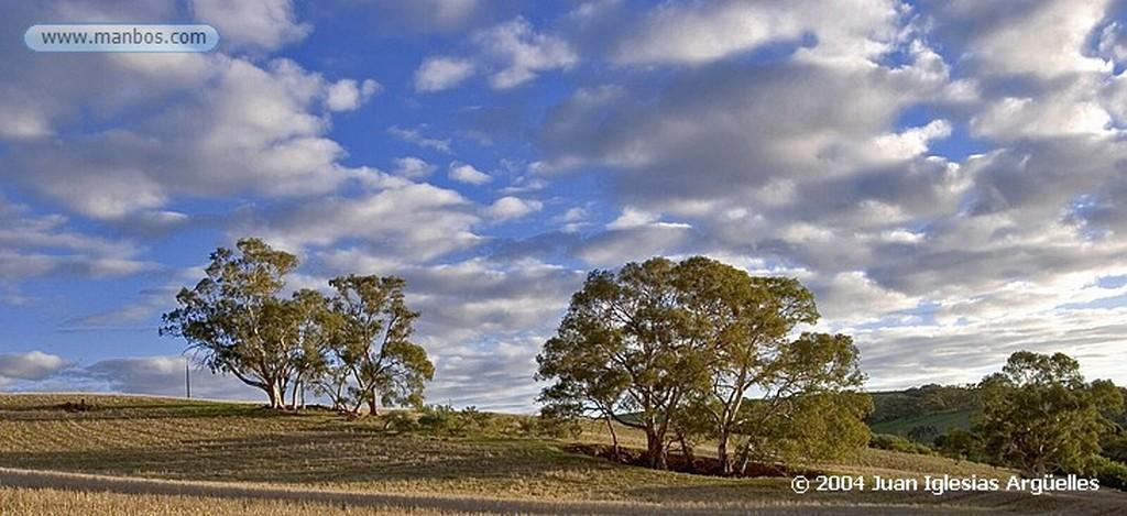 Wirrabara Eucaliptos Australia Meridional