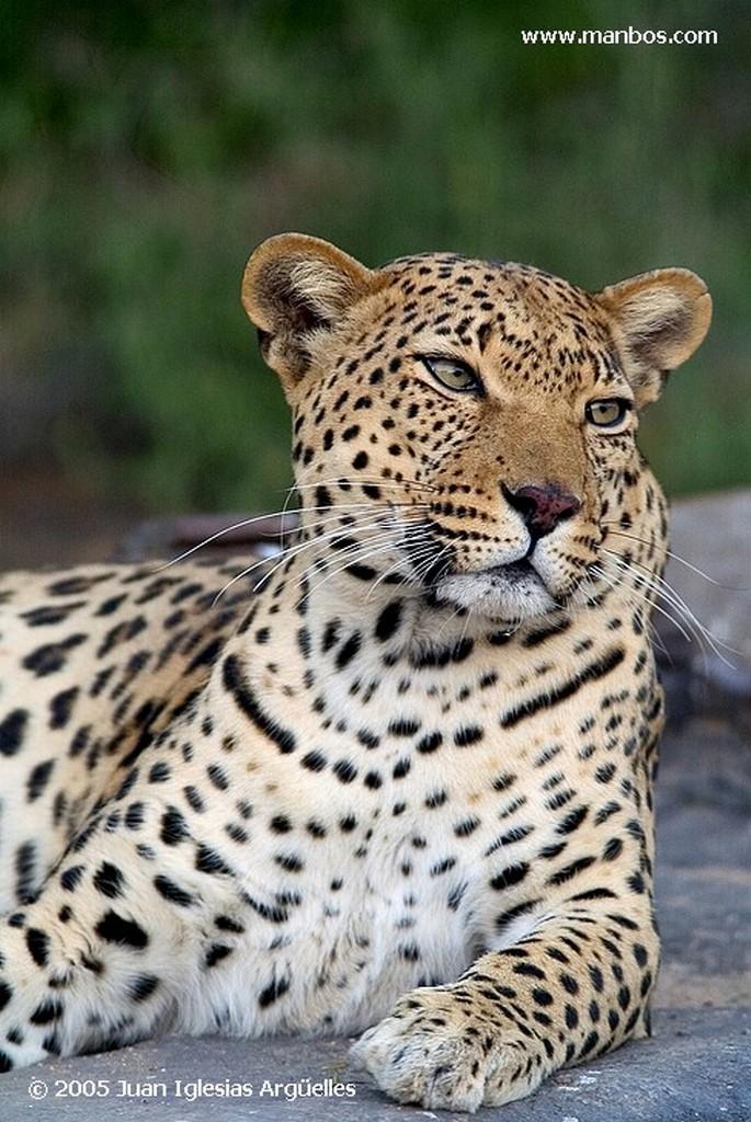 Leopard Park Tsaobis Leopard Nature Park Namibia