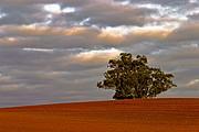 Camara Canon EOS 10D Eucalipto Australia AUBURN Foto: 14623