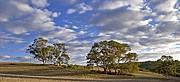 Camara Canon EOS 10D Eucaliptos Australia WIRRABARA Foto: 14622