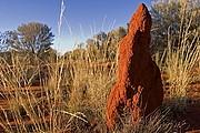 Camara Canon EOS 10D Termitero Australia PARQUE NACIONAL NITMILUK Foto: 14587