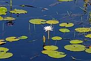 Camara Canon EOS 10D Vegetacion en un billabong Australia PARQUE NACIONAL DE KAKADU Foto: 14570
