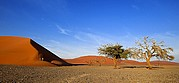 Camara Canon EOS-1D Desierto del Namib Namibia NAMIB NAUKLUFT PARK Foto: 9971