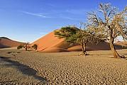 Camara Canon EOS-1D Desierto del Namib Namibia NAMIB NAUKLUFT PARK Foto: 9972