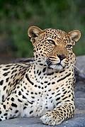 Tsaobis Leopard Nature Park, Leopard Park, Namibia