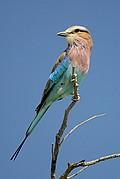 Etosha National Park, Etosha National Park, Namibia