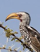Camara Canon EOS-1D Parque Nacional de Etosha Namibia ETOSHA NATIONAL PARK Foto: 9988