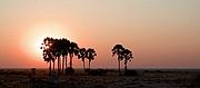 Camara Canon EOS-1D Atardecer en Tree Palms Namibia ETOSHA NATIONAL PARK Foto: 9995