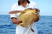 Foto de Funchal, Bahia de Funchal, Portugal - Censando tortugas