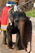 Fuerte Amber, Amber, India