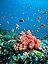 Maldivas Coralblando Maldivas