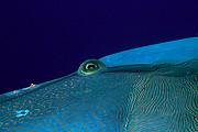 Maldivas, Maldivas, Maldivas