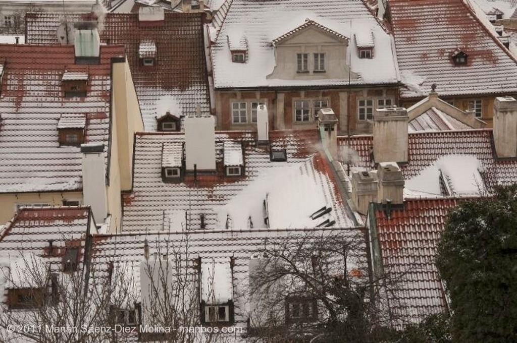 Praga Gaviotas acechando Praga