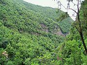 Camara Olympus C350 Bosque los Tilos M Luisa Alberola LA PALMA Foto: 9940