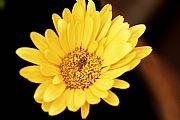 Camara Canon EOS 350D DIGITAL Flor de primavera. Sergio Arrebola Arrebola SANT CUGAT DEL VALLES Foto: 8918