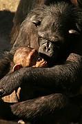 Zoo de Barcelona, Zoo de Barcelona, España