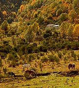 Asturias, Asturias, España