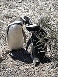 Camera Panasonic Lumix Pingüinera de Punta Tombo Marta Reyes Gallery PENINSULA VALDES Photo: 16937