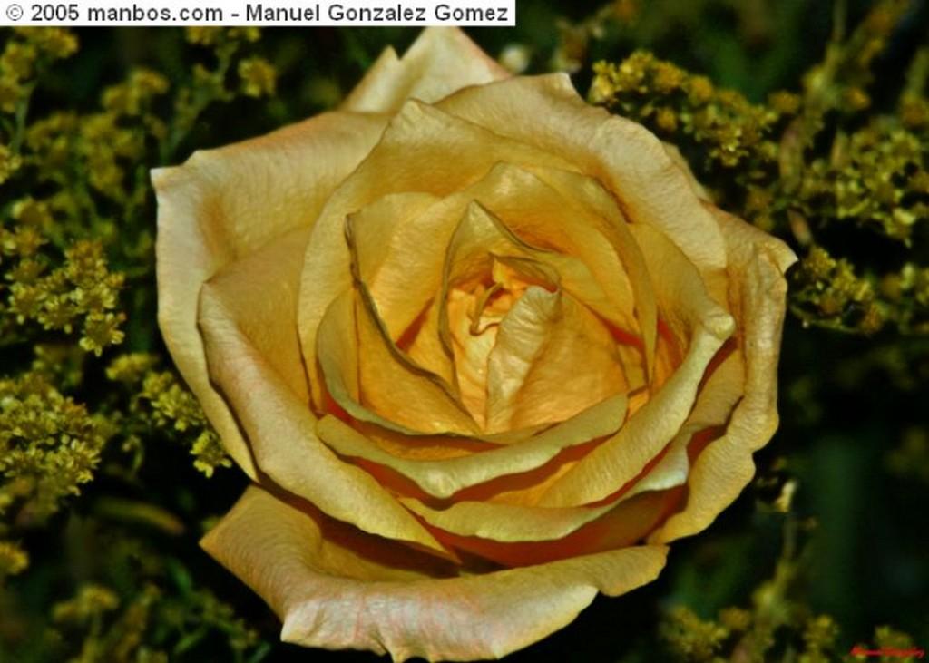 Benalmadena Cisnes, pareja eterna Malaga