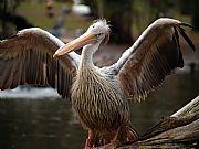 Camara Olympus E-300 pelicano. paciencia animal Félix Fernández Bravo ZOO DE MADRID Foto: 5748