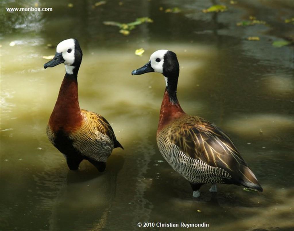 Maturin  Inicio del Delta del Orinoco  Monagas