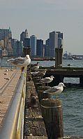 Camara Nikon D50 La banda Roberto Ouro Villaraviz NUEVA YORK Foto: 15558