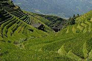 Terrazas de arroz, Longshen, China