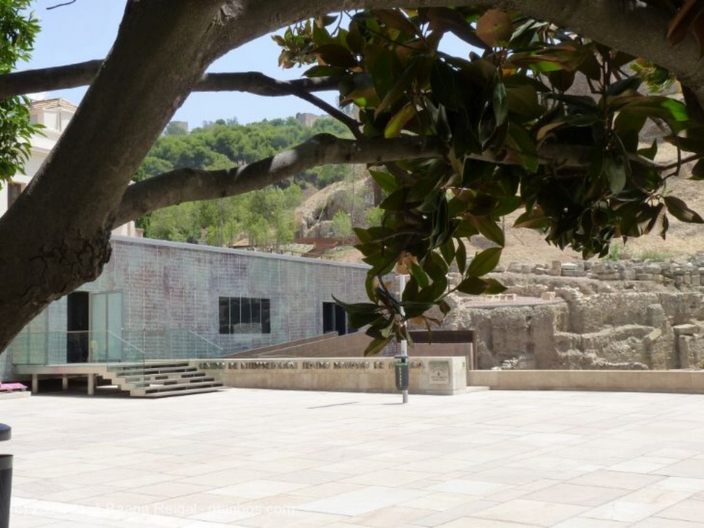 Malaga Troncos de siglos Malaga