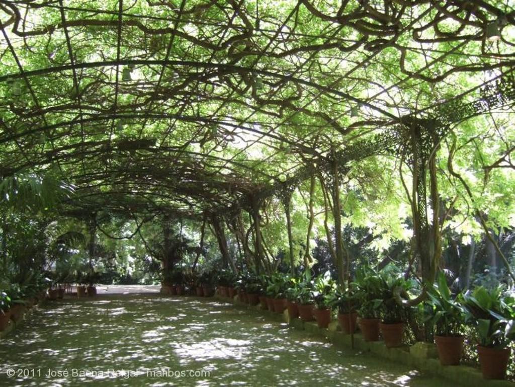 Malaga Flora tropical Malaga
