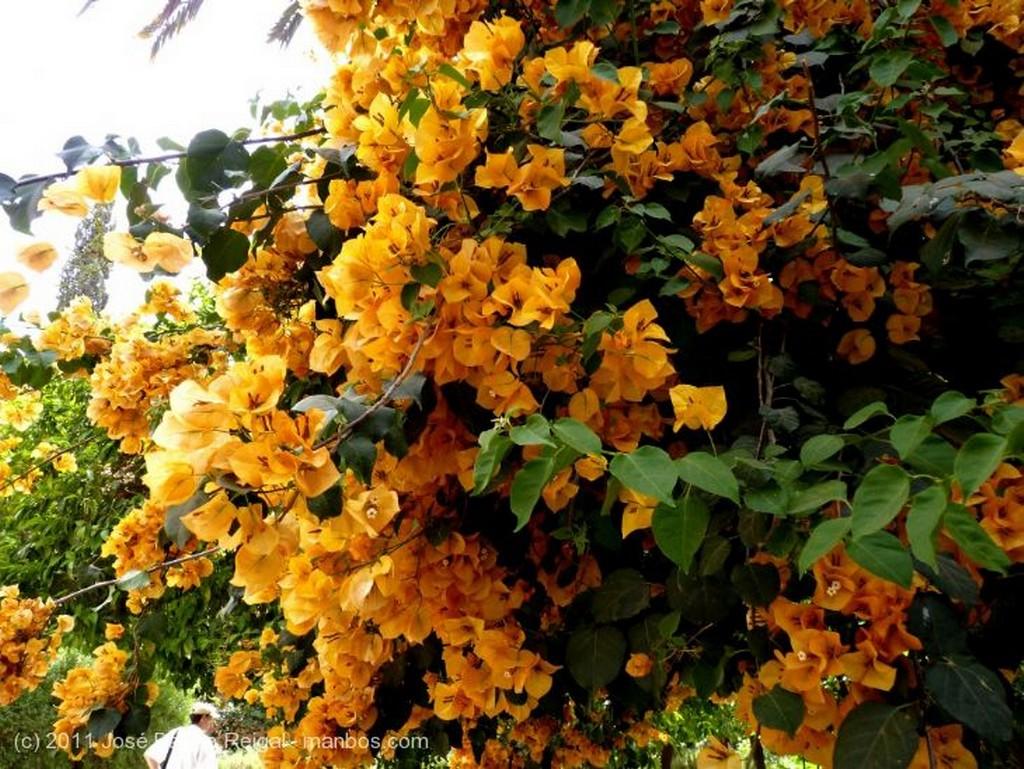 Marrakech Reina de las flores  Marrakech