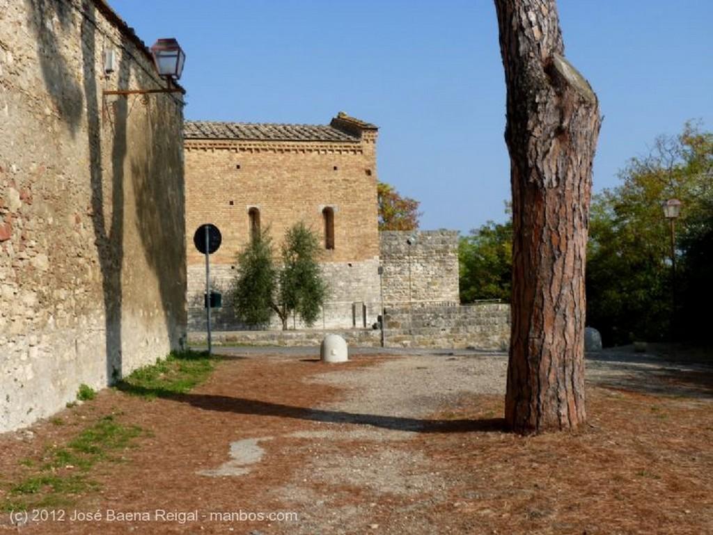 San Gimignano Olivos y vides Siena