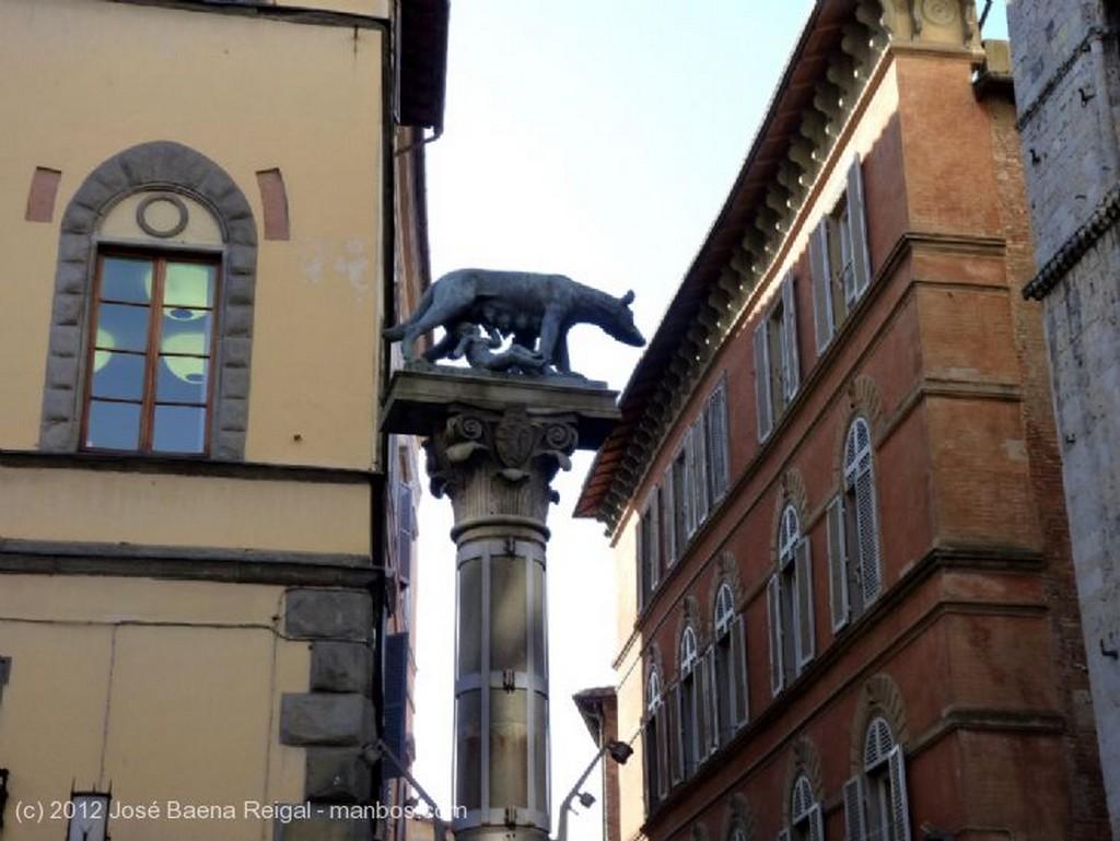 Siena Paloma solitaria Toscana