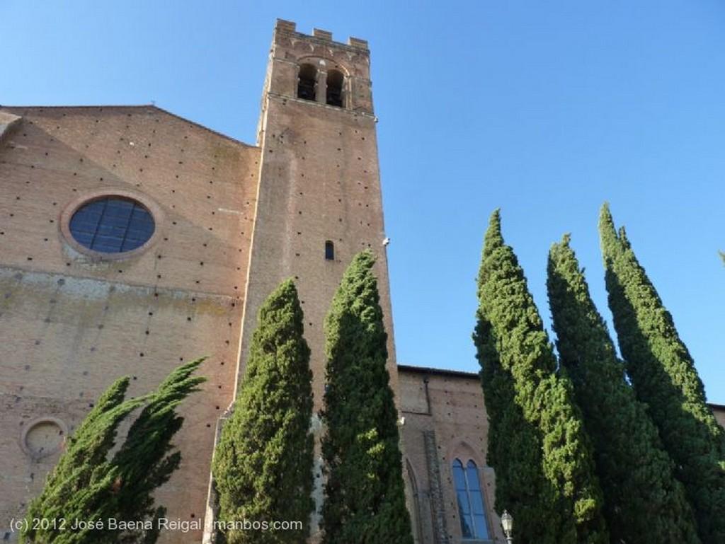 Siena Palomas invasoras Toscana