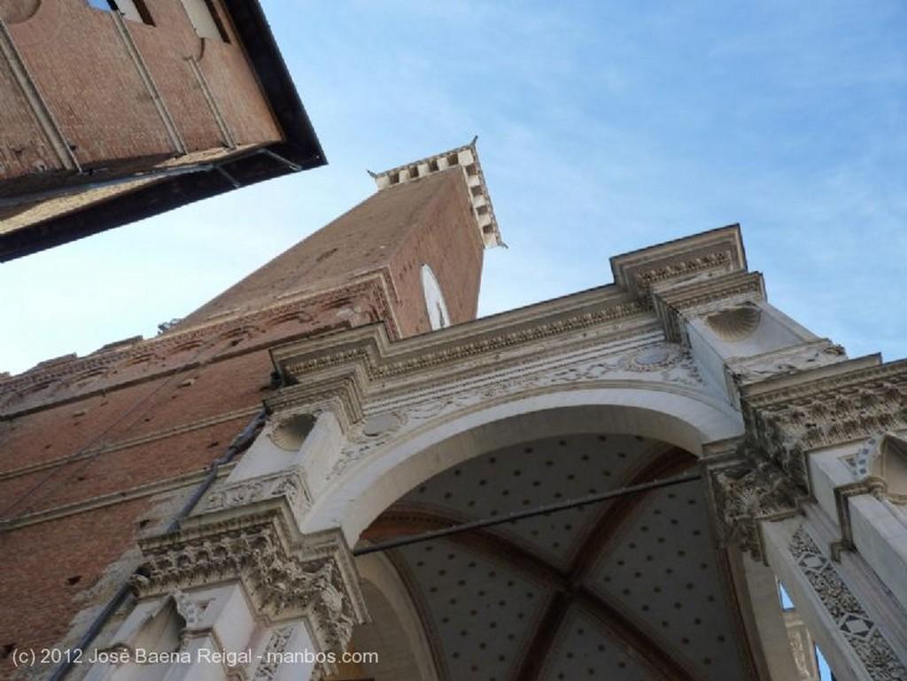 Siena Cipreses altivos Toscana