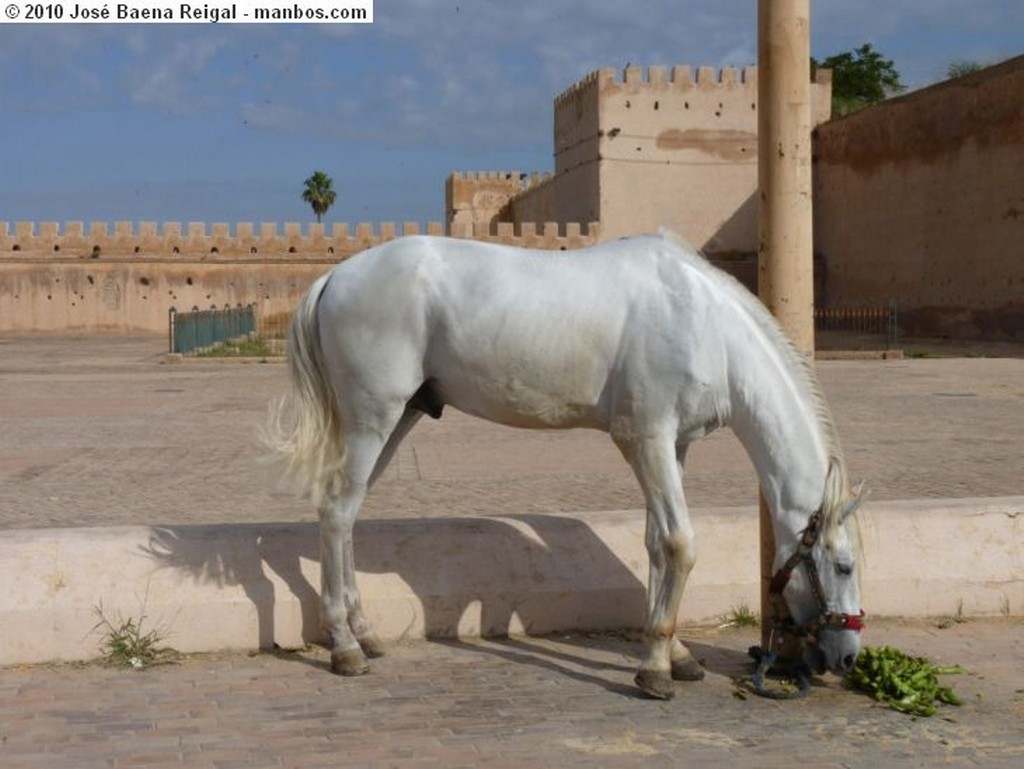 Meknes Atardecer en la medina Meknes