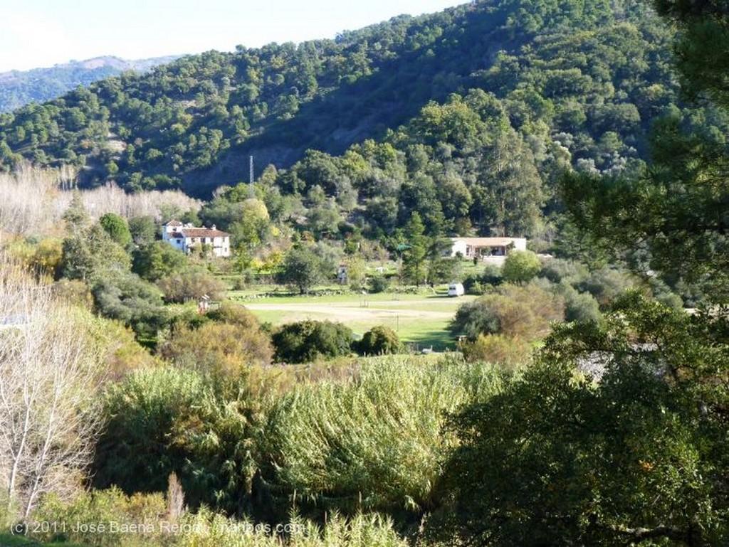 Valle del Genal Arboles del corcho Malaga