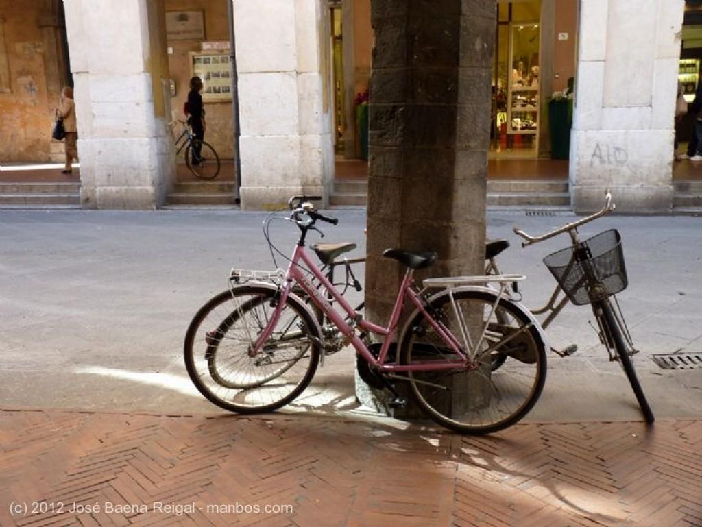 Pisa Contra las malditas palomas Toscana