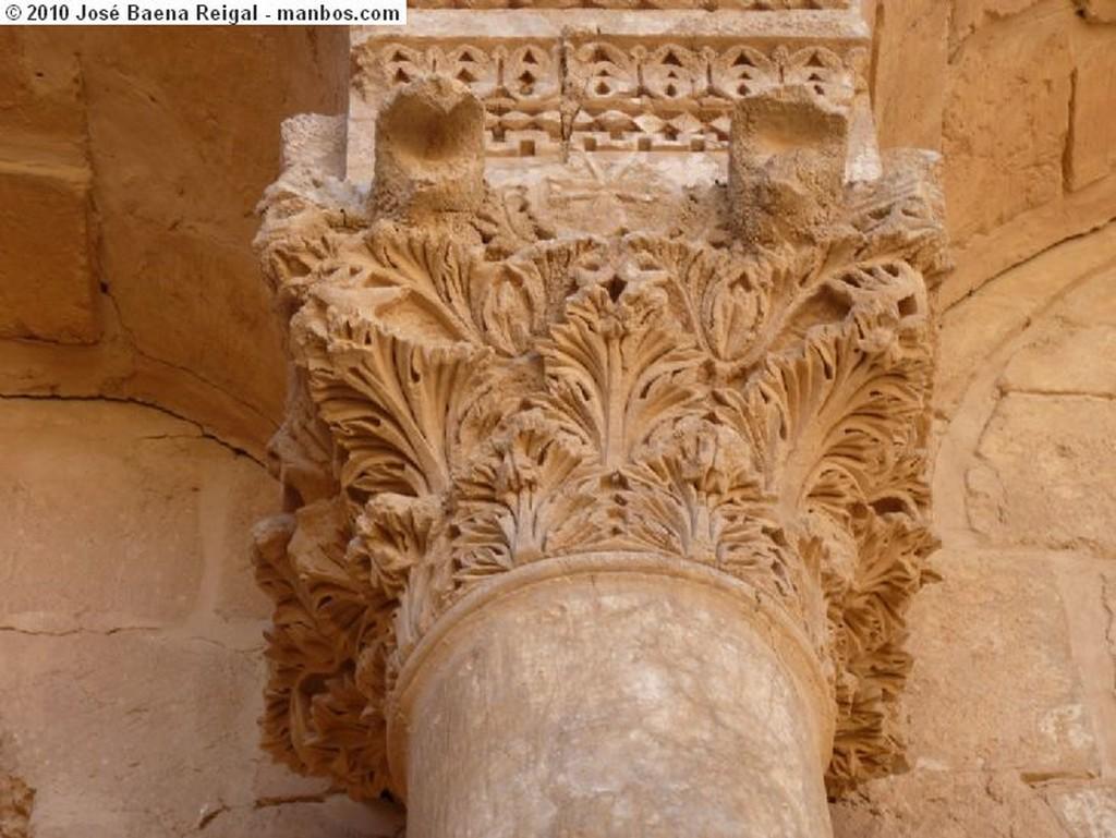 Palmira Camellos en Palmira Tadmor