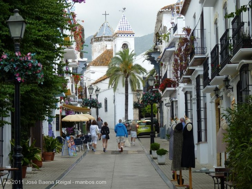 Marbella Plantas trepadoras Malaga