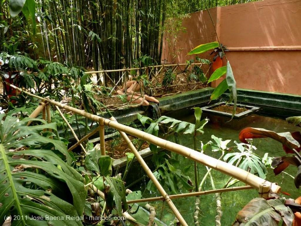 Marrakech Bosquecillo de bambus Marrakech