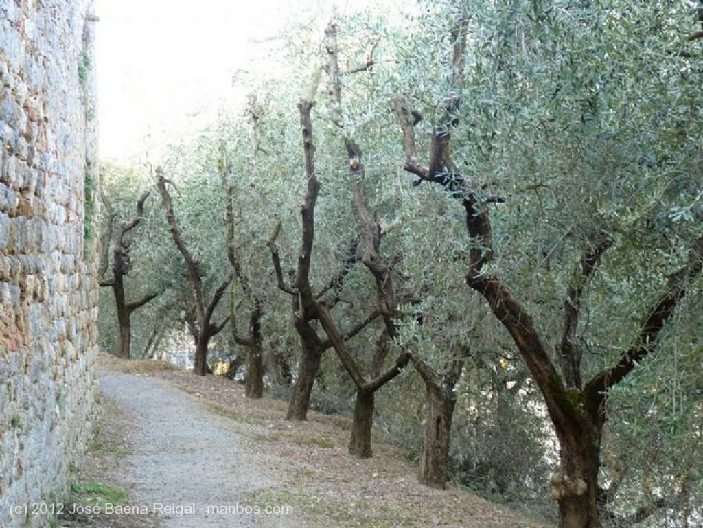 San Gimignano Campos de vides Siena